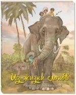 Из жизни слонов : рассказы русских писателей